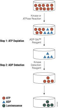 ADP-Glo™ Kinase Assay flowchart