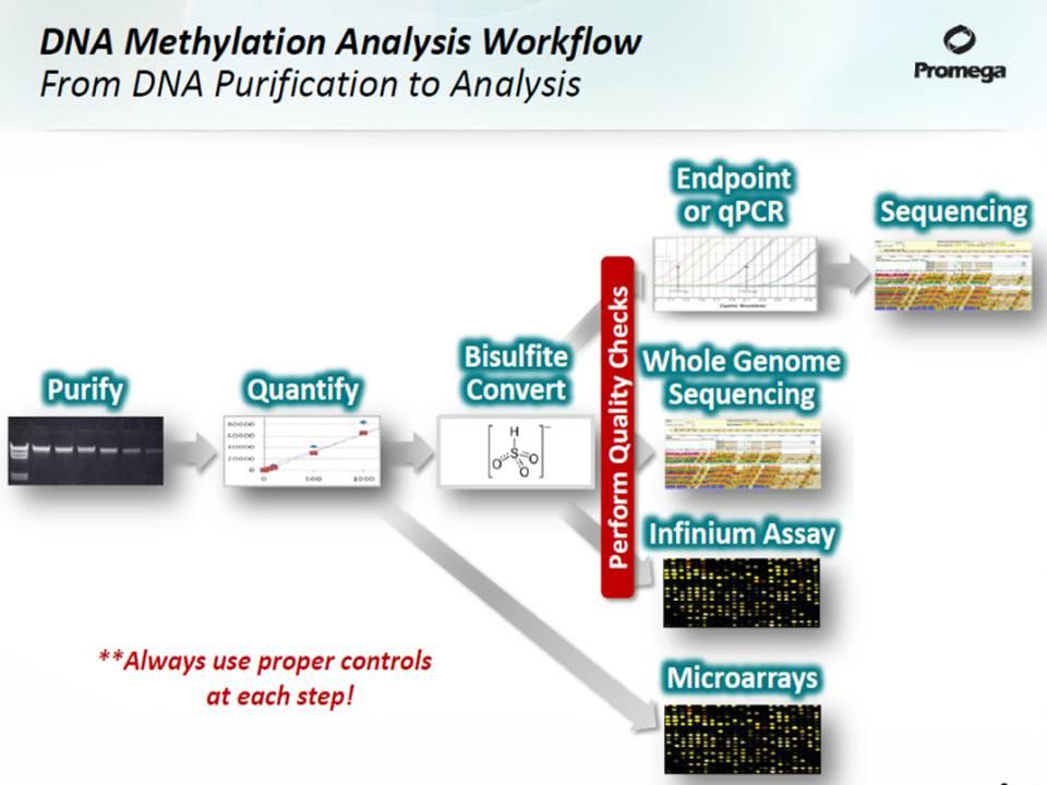 Dna Methylation Blood Test